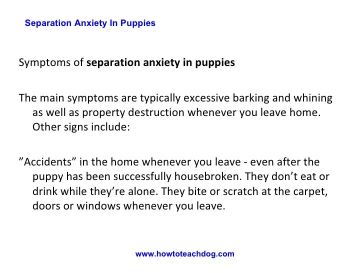 how to avoid separation anxiety in puppies