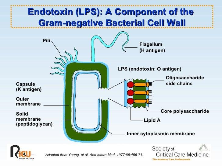 K Antigen Bacteria Sepsis And Septic Shoc...