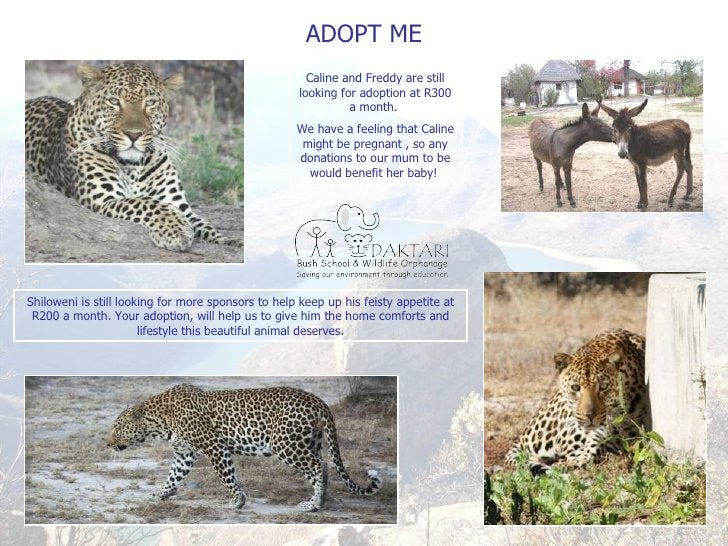 ADOPT ME Caline and Freddy are still looking for adoption at R300 a month.  We have a feeling that Caline might be pregnan...