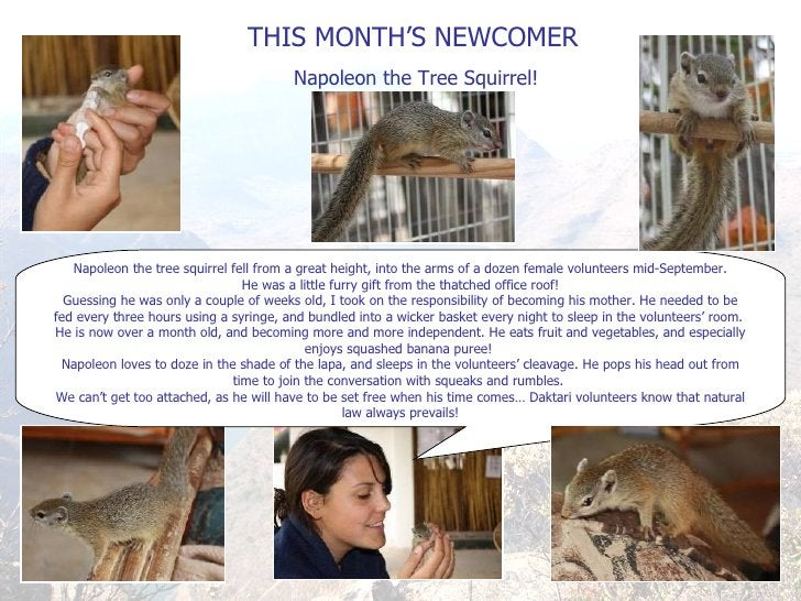 THIS MONTH ' S NEWCOMER Napoleon the Tree Squirrel! Napoleon the tree squirrel fell from a great height, into the arms of ...