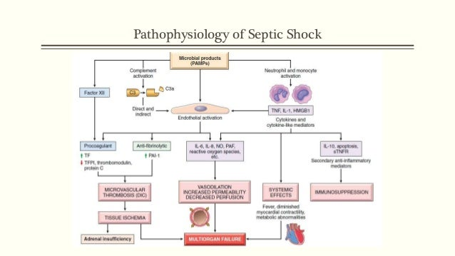 septic shock, Skeleton