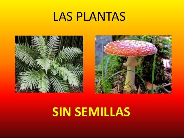 septimo 2 las plantas sin semillas