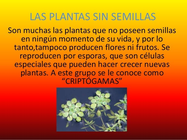 que son las plantas con semillas