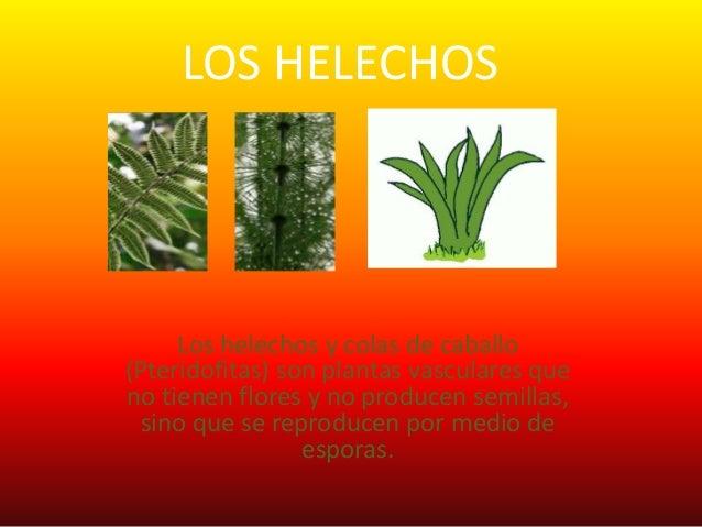 Septimo 2 las plantas sin semillas for Que son plantas ornamentales ejemplos