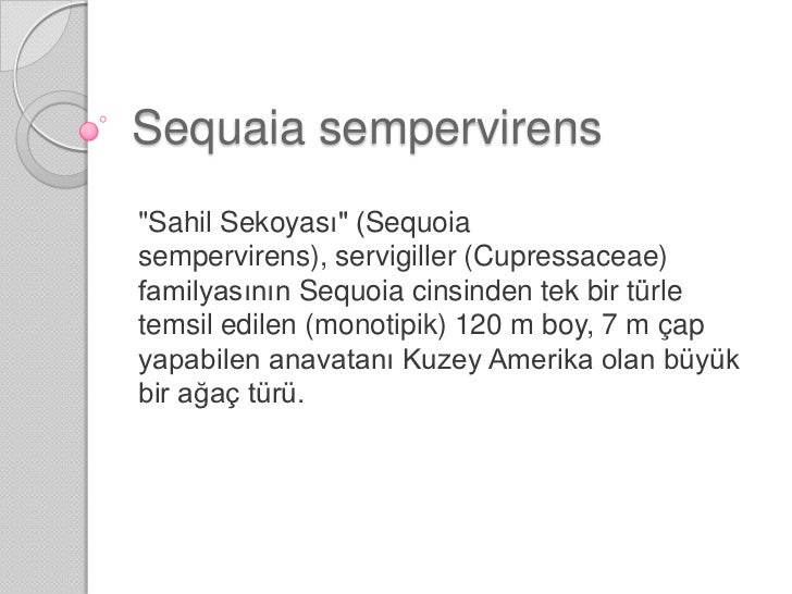 "Sequaiasempervirens<br />""SahilSekoyası"" (Sequoiasempervirens), servigiller (Cupressaceae) familyasının Sequoia cinsinden ..."