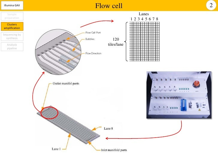 Illumina Gaiix For High Throughput Sequencing