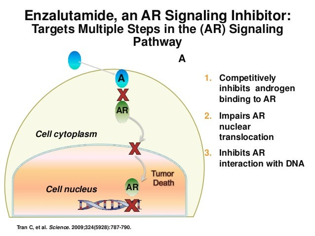 Enzalutamide: A new prostate cancer targeted therapy ...