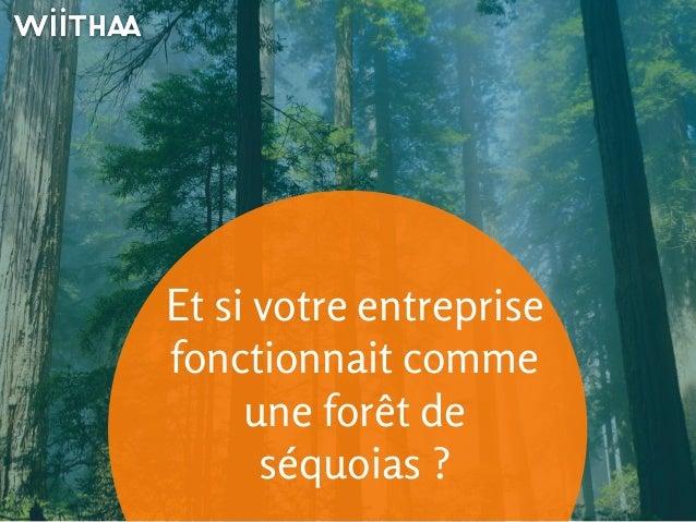 Et si votre entreprise  fonctionnait comme  une forêt de  séquoias ?