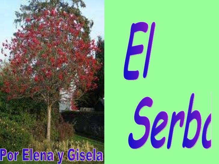 El  Serbal Por Elena y Gisela