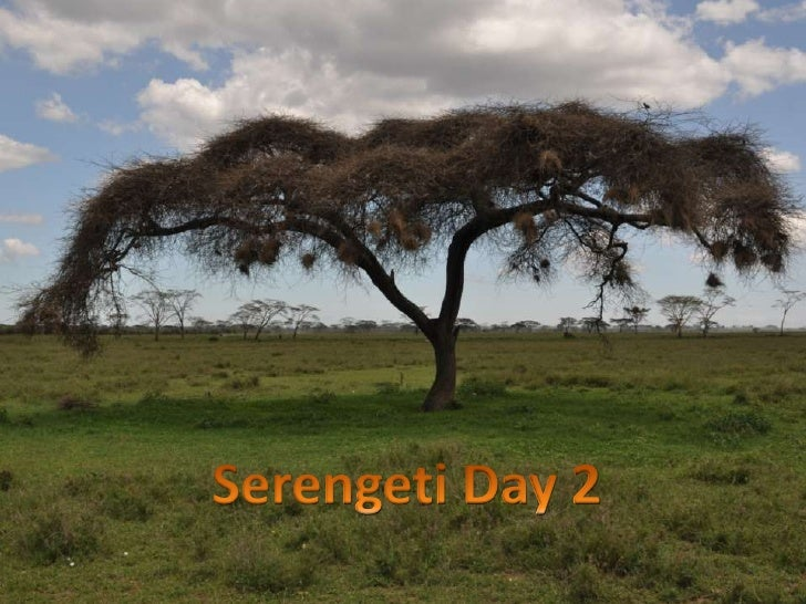Serengeti Day 2<br />
