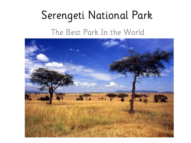 Serengeti National Park The Best Park In the World