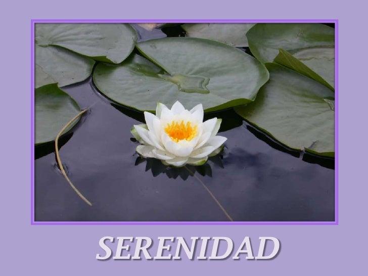SERENIDAD<br />