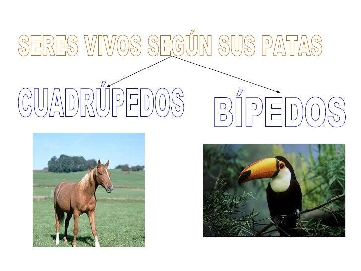 SERES VIVOS SEGÚN SUS PATAS BÍPEDOS  CUADRÚPEDOS