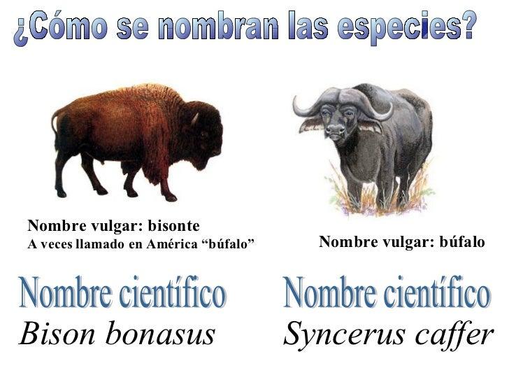 K Es Un Bisonte Seres vivos nombrar