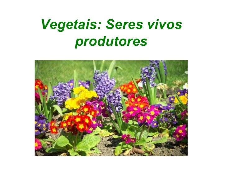 Vegetais: Seres vivos    produtores