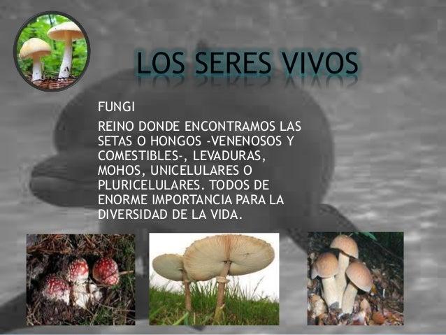 FUNGI REINO DONDE ENCONTRAMOS LAS SETAS O HONGOS -VENENOSOS Y COMESTIBLES-, LEVADURAS, MOHOS, UNICELULARES O PLURICELULARE...