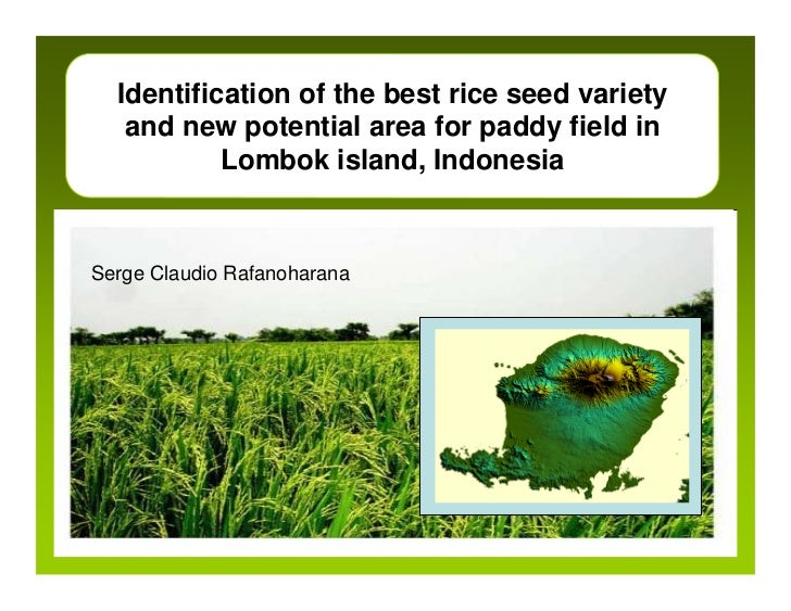Identification of the best rice seed variety   and new potential area for paddy field in           Lombok island, Indonesi...