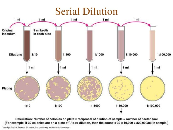 Serial Dilution 3 728gcb1299411648