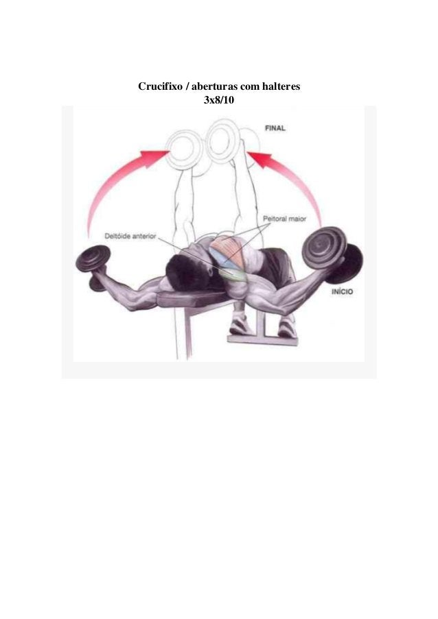 Crucifixo / aberturas com halteres 3x8/10 T Treinamento de costas