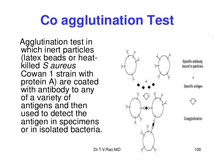 Co agglutination TestAgglutination test inwhich inert particles(latex beads or heat-killed S aureusCowan 1 strain withprot...