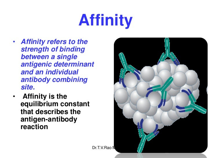 Affinity• Affinity refers to the  strength of binding  between a single  antigenic determinant  and an individual  antibod...