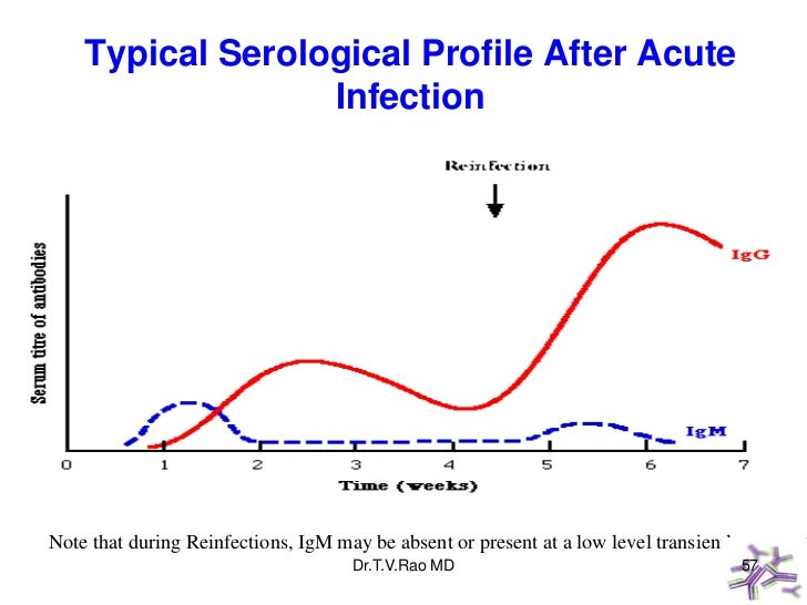 Typical Serological Profile After Acute                  InfectionNote that during Reinfections, IgM may be absent or pres...