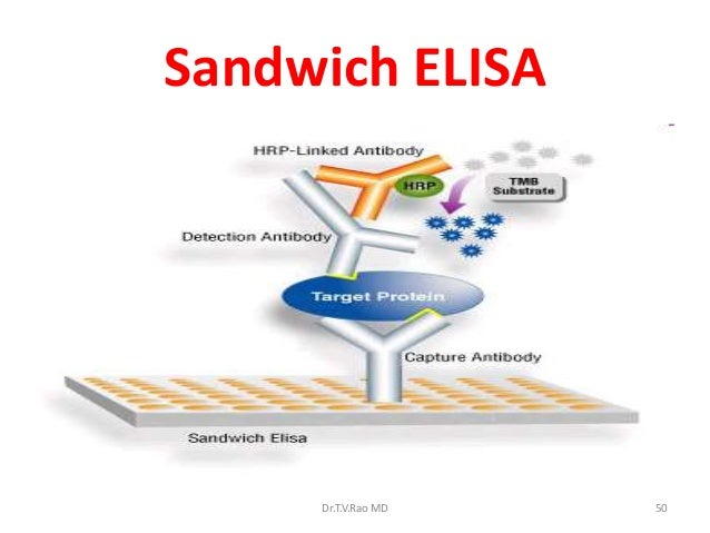 sandwich elisa assay protocol Rockland offers a wide variety of elisa kits in sandwich assay formats over 800 complete, ready to use elisa kits for detection of specific growth factors.