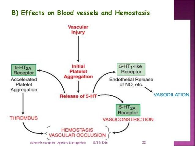 B) Effects on Blood vessels and Hemostasis 12/24/2016 22Serotonin receptors: Agonists & antagonists