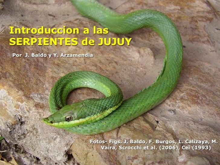 Introduccion a las SERPIENTES de JUJUY Por J. Baldo y Y. Arzamendia                               Fotos- Figs. J. Baldo, F...