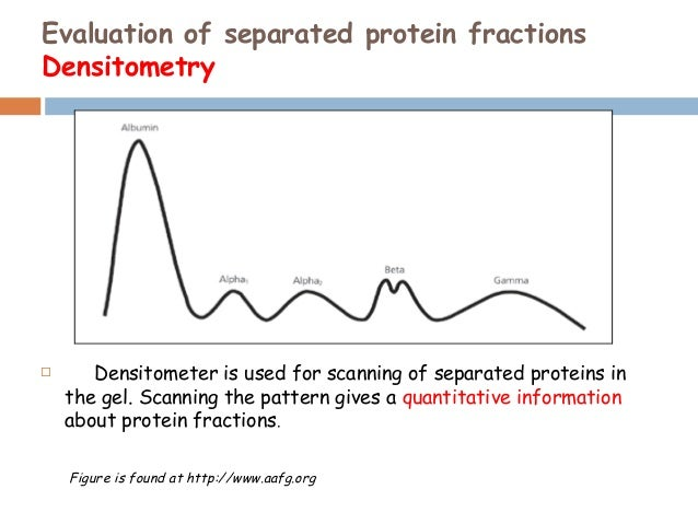 serum protein electrophoresis Serum protein electrophoresis (spe) separates proteins into multiple bands based on the size and charge of the protein each band on the spe gel represents one or more proteins with similar.