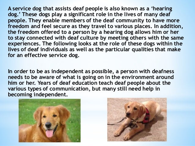 service dog for hearing impaired