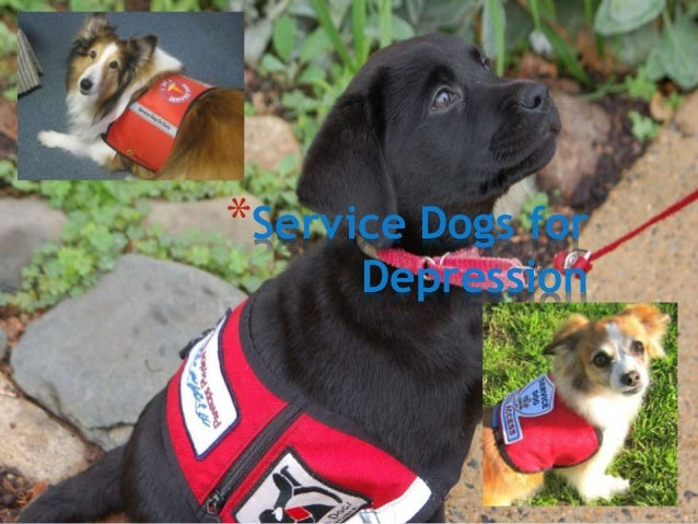 Owner Trained Psychiatric Service Dog