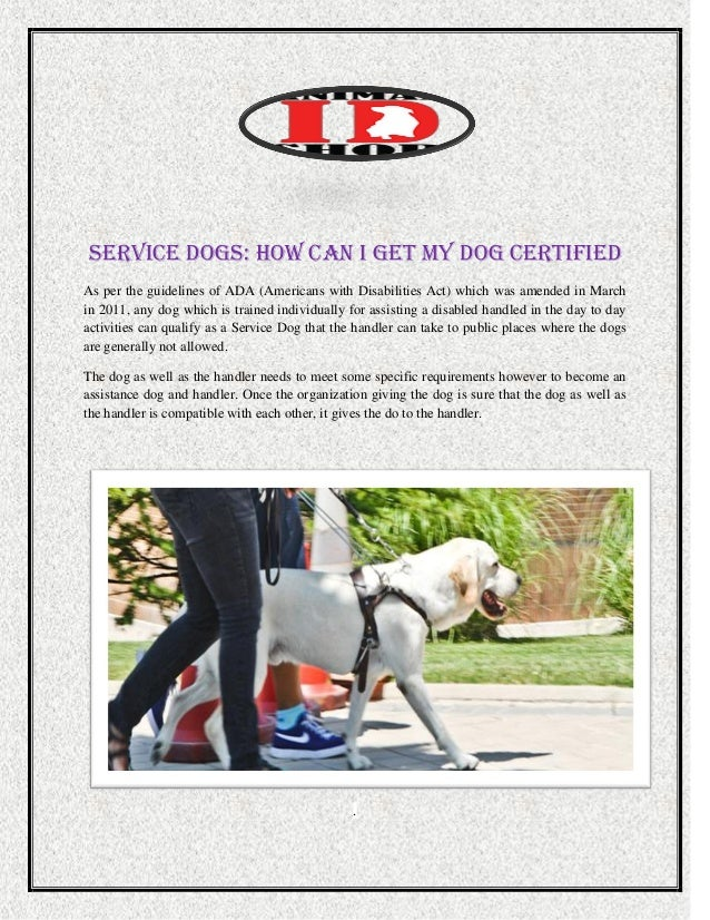 Service dogs how can i get my dog certified