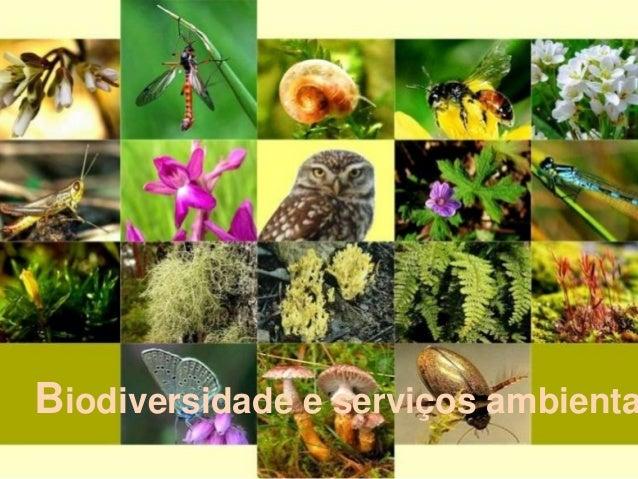 Biodiversidade e serviços ambienta