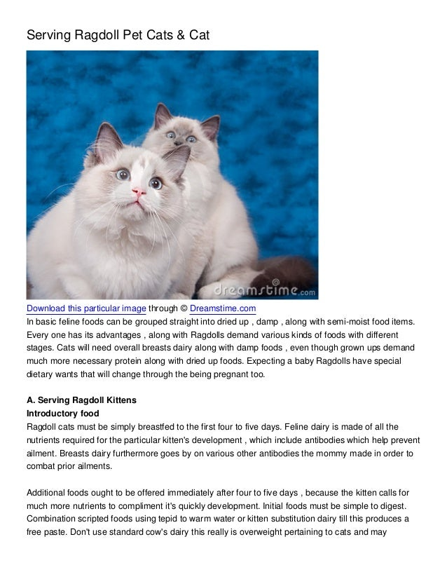 Serving Ragdoll Pet Cats & CatDownload this particular image through © Dreamstime.comIn basic feline foods can be grouped ...