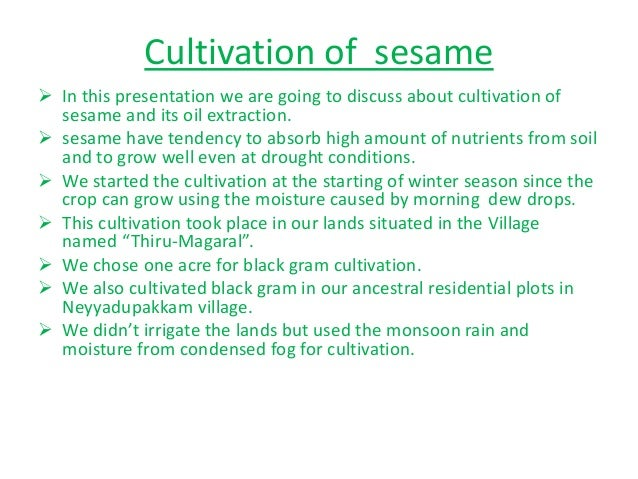 Cultivation of sesame  In this presentation we are going to discuss about cultivation of sesame and its oil extraction. ...