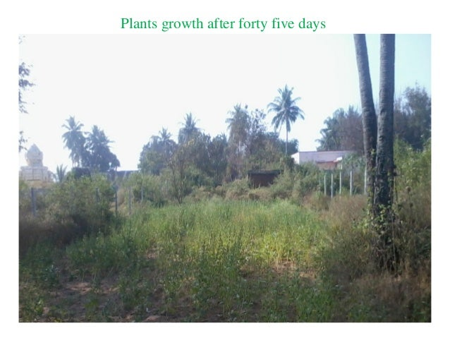Plants growth after forty five days