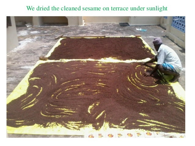 We dried the cleaned sesame on terrace under sunlight