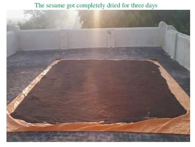 The sesame got completely dried for three days