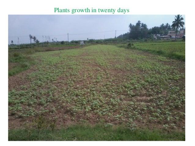 Plants growth in twenty days