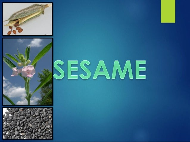 Introduction  Scientific name :Sesamum indicum  Family: Pedaliaceae  Chromosome number : 2n=2x=26  Other names : Til, ...
