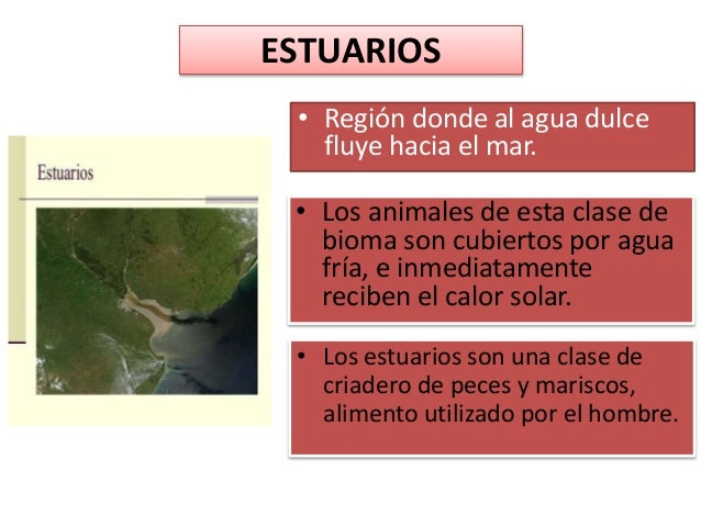 Sesi n biomas y ecosistemas de ecuador for Criaderos de peces de agua fria