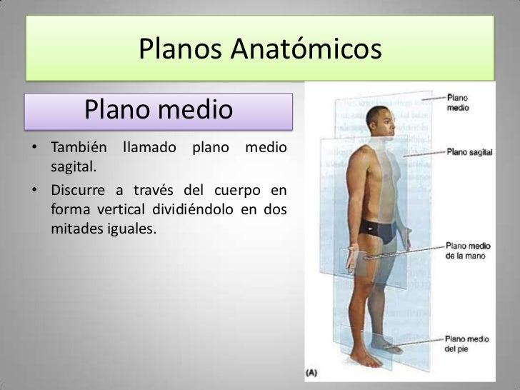Sesión 01 - Introducción a la Anatomía