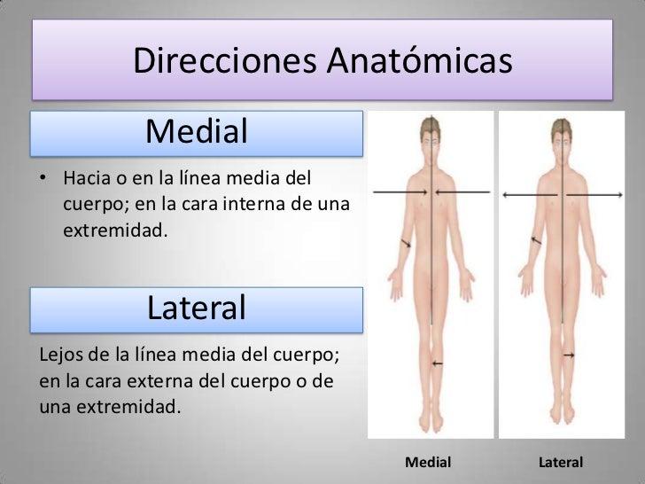 Famoso Definir La Anatomía Medial Festooning - Anatomía de Las ...