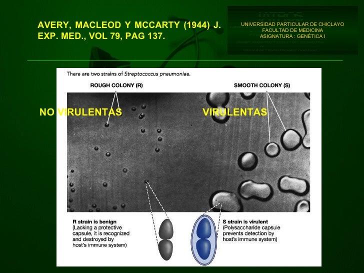 UNIVERSIDAD PARTICULAR DE CHICLAYO FACULTAD DE MEDICINA ASIGNATURA : GENÉTICA I AVERY, MACLEOD Y MCCARTY (1944) J. EXP. ME...