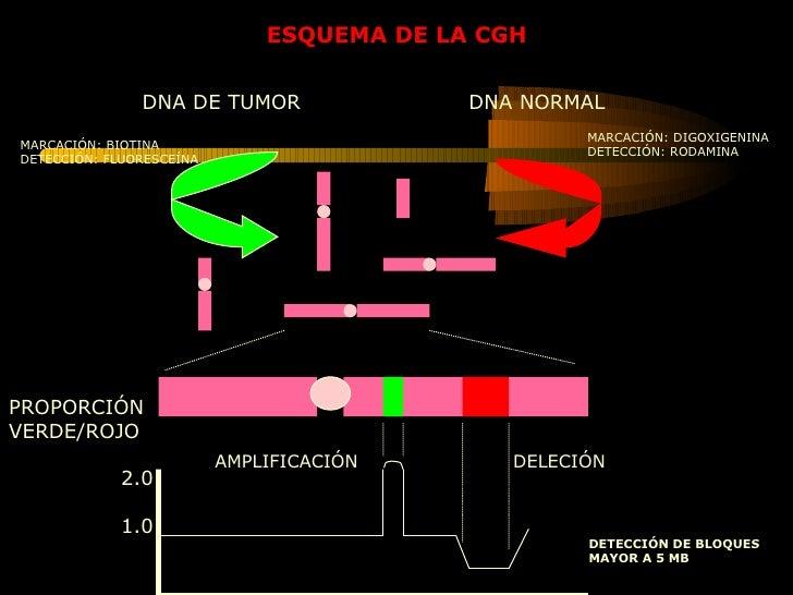 PROPORCIÓN VERDE/ROJO 2.0 1.0 AMPLIFICACIÓN  DELECIÓN DETECCIÓN DE BLOQUES  MAYOR A 5 MB DNA DE TUMOR  DNA NORMAL MARCACIÓ...