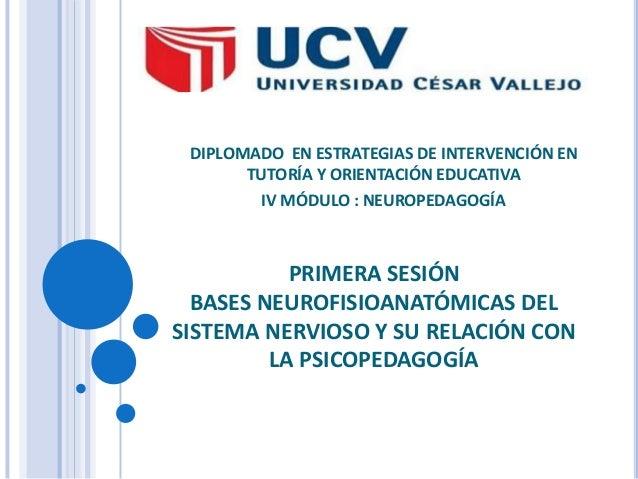 DIPLOMADO EN ESTRATEGIAS DE INTERVENCIÓN EN TUTORÍA Y ORIENTACIÓN EDUCATIVA IV MÓDULO : NEUROPEDAGOGÍA  PRIMERA SESIÓN BAS...