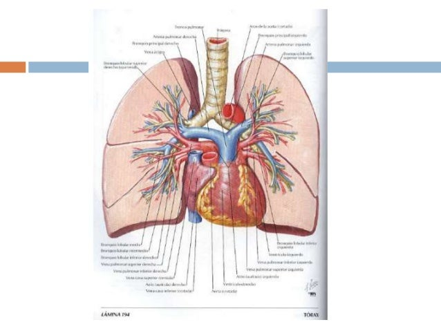 Sesión: tromboembolismo pulmonar