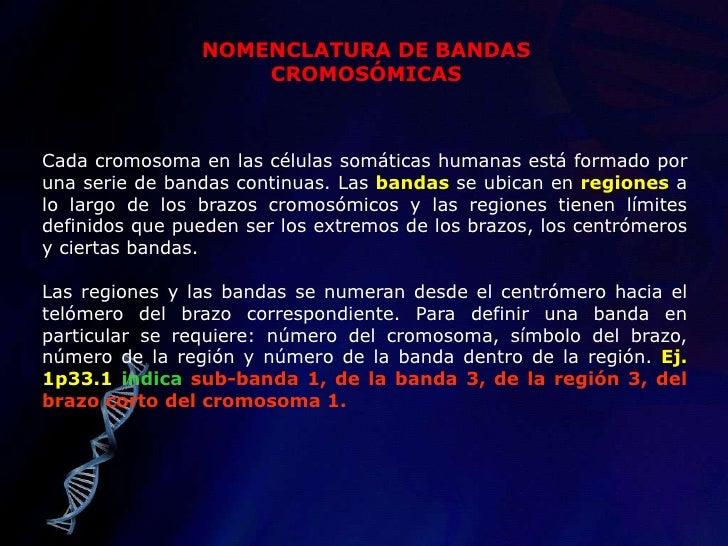 En base a los genes en común en MZ y DZ, la concordancia en MZ debe ser de 1.</li></li></ul><li>ESTUDIO DE MELLIZOS<br /><...