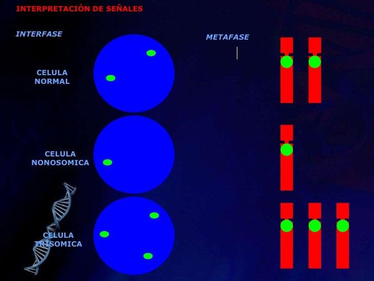 Reacción en Cadena de la Polimerasa: PCR